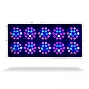 Kind LED K3 L600 Vegetative Bottom Illuminated