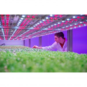 Growing-Tomatoes-with-LED-Lights