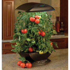 Indoor-Vegetable-Gardening