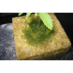 rockwool mold